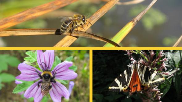 Illustration - insectes pollinisateurs
